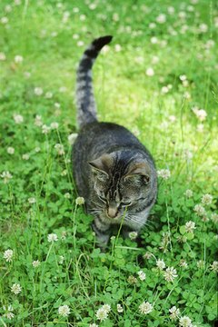 Your cat can probably eat as much catnip as she wants.