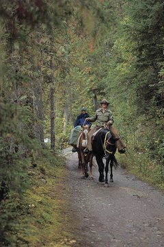 Park rangers protect wildlife and visitors from criminal behavior.