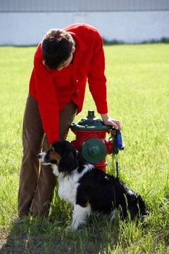 """You can bring a dog to a fire hydrant..."""
