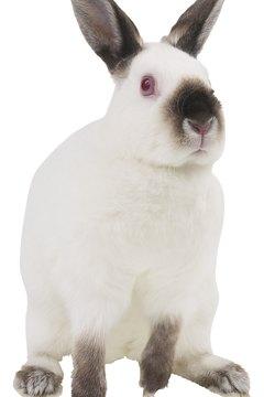 Bunnies are sensitive, so keep Sparky from startling Bunbun.