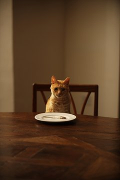 Can Cats Taste Spicy Food? - Pets