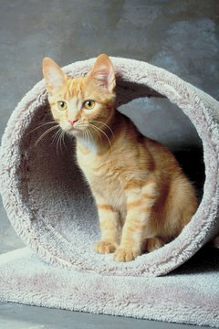 Cat trees satiate their climbing, scratching, playing, napping and surveying needs.