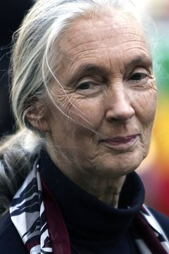 Some anthropologists, like Jane Goodall, study primates as well as humans.