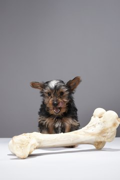 What you don't see is the owner of that bone looking none too pleased.