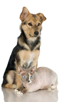 Teach your puppy to love his cat friends gently.