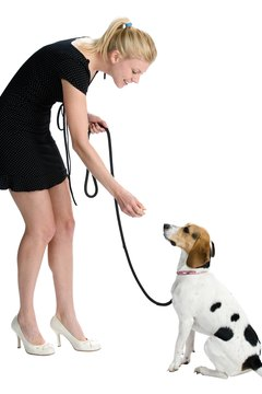 Teaching a puppy to sit can help focus his energy.