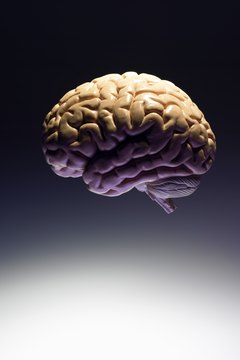 Cognitive psychology studies focus on brain-behavior connections.