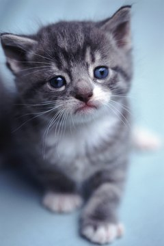 Kittens are born with their eyes closed, but they open up after a few days.