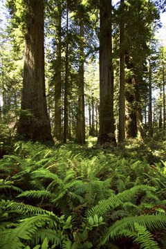 Redwoods National Park, California