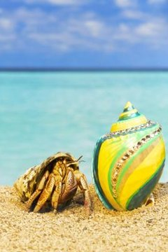 What Does It Mean When Hermit Crabs Leave Their Shells