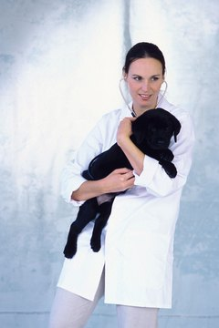 Woman veterinarian holding puppy