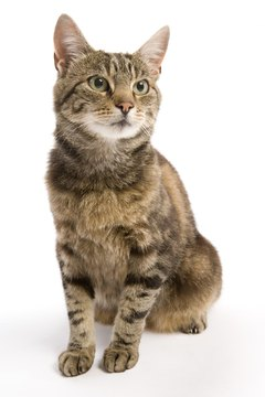 Some people believe tabby cats are friendly and outgoing -- because of their coloring.