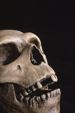 Students interested in forensic anthropology can choose to attend a number of exemplary colleges and universities.