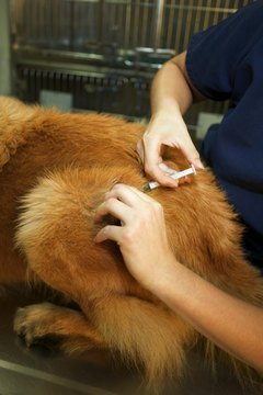 Dogs should get their vaccinations, but owners should be aware of the side effects.