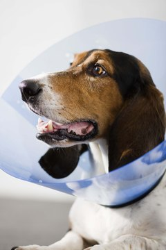 """Is this cone of shame a punishment?"""