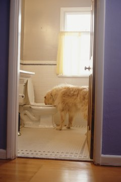 Dogs can't use a your toilet, and they shouldn't drink from one.