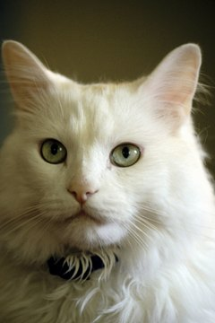 Tiny white worms on your cat could indicate a tapeworm infection.