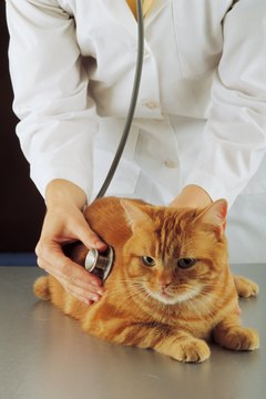 A stuck hairball may dictate a vet visit.