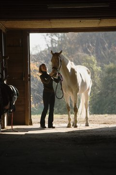 An equine business degree prepares students to evaluate horses and manage farms.