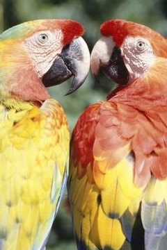 The Side Effects From Milk Thistle in Birds or Parrots