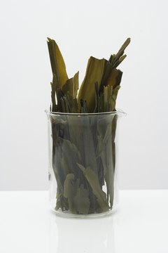 Seaweed is an excellent source of omega-3 fatty acids.