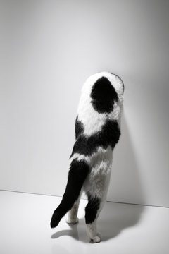 A cat can convey so much just through her tail.