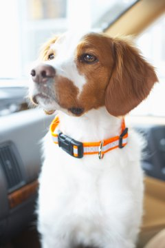 Nylon dog collars tend to be comfortable for both your dog's neck and your wallet.
