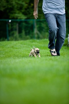 Exercise with your dog to expend energy and promote calmness.