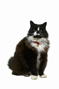 Phosphoric acid is used in cat food to ensure Mittens' urinary pH is ideal.