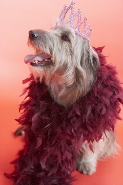 """Yes, I am proud to be a canine diva!"""