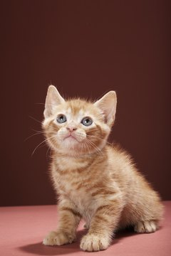 Small kittens are vulnerable to a host of illnesses requiring antibiotics.
