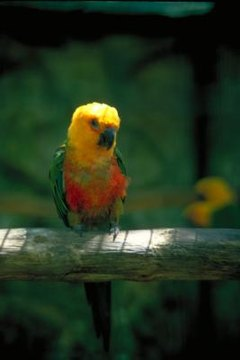 How to Get Rid of Mites on Parrots | Animals - mom me