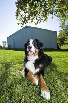 Getting dirty outdoors can cause scratching and increase shedding, if Fido doesn't get a bath soon afterward.