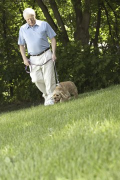 Take your puppy to the same spot every morning when house-training.