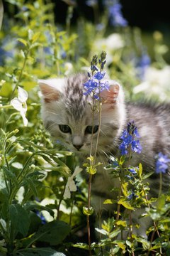 In your cat's mind, the garden makes a perfect outdoor litter box.