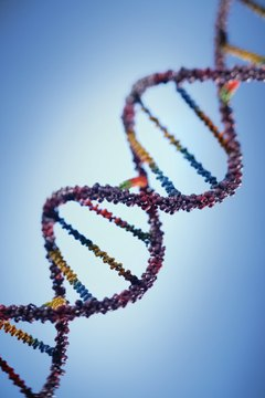 Job Description to Be a Molecular Biologist Career Trend