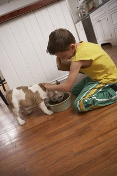 Bulldogs can be loyal family pets.