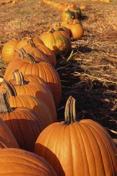 Use pumpkin seeds to introduce math concepts.
