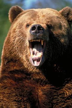 With well-reasoned mutual fund purchases, you might be able to tame the bear.