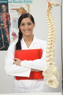Chiropractors and orthopedists are experts in the musculoskeletal system.