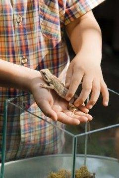 Ways to Play With a Bearded Dragon Lizard | Animals - mom me