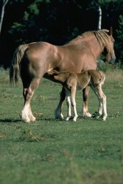 How Long Are Female Horses Pregnant? | Animals - mom me