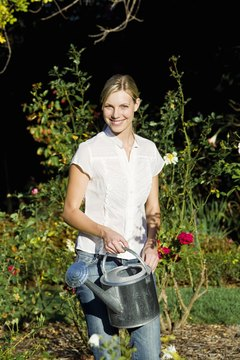 Put compost tea in that watering can to help fight plant disease and boost plant health.