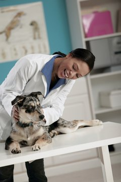Veterinarians examine, diagnose and treat a variety of animals, including household pets.