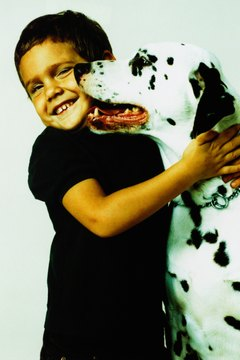 Dalmatians make great family pets, and many also do well with cats and other household pets.