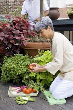 Stretch frequently when gardening to reduce tightness of lower-back muscles.