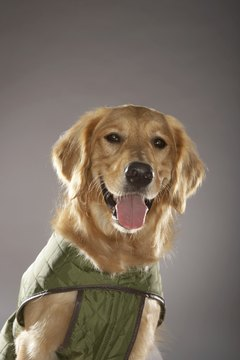 Make a plain vest reflective for dog safety.