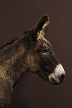 Are Donkey Jacks Always Dangerous? | Animals - mom me