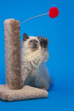 Scratching posts can minimize damage to furniture.