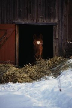 What Is Fodder for Horses? | Animals - mom.me